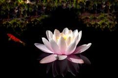 basen waterlily Fotografia Royalty Free