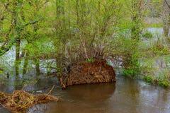 Basen woda na tropikalny las deszczowy podłoga po ulewnego deszczu bardzo Fotografia Stock