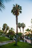 Basen z drzewkami palmowymi i parasolami zdjęcia stock
