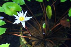 Basen z lelujami i drzewkami palmowymi wokoło mnie Seascape Indonezja zdjęcie stock