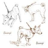 Basenji libre illustration