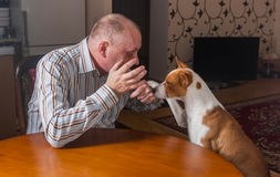 Basenji dog having hard conversation with master sitting at the table.  The dog calms gesticulating man Stock Image