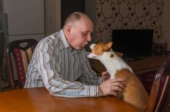 Basenji dog having hard conversation with master. Sitting at the table. The dog shows its last argument Stock Image