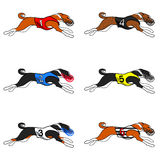 Basenji dog racing set 01 Royalty Free Stock Photography