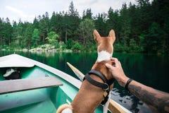Basenji Dog Sits On Boat At Alpine Lake Stock Image
