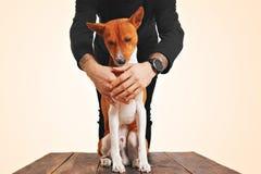 Basenji hund som kramas av ägaren royaltyfri fotografi