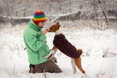 Basenji in the snow. stock photo