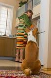 Basenji wartet bis Bedienstetkoch sein Mittagessen Lizenzfreies Stockfoto