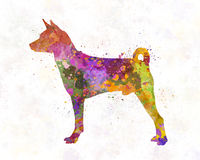 Basenji in watercolor Stock Photography