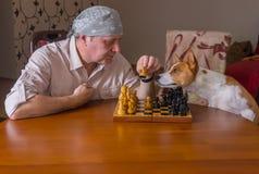 Basenjihond die meester met beweging in schaak helpt royalty-vrije stock fotografie