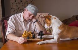 Basenjihond geruïneerde combinatie van zijn menselijke schaaktegenstander royalty-vrije stock fotografie