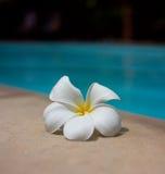 basenu dopłynięcie Zdjęcia Royalty Free