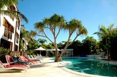 baseny palmowi drzewa Zdjęcie Stock