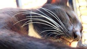 Basette dei gatti Immagine Stock