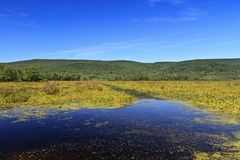 Bashakill. Wildlife Management Area on the summer day royalty free stock photo