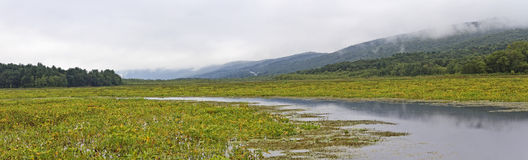 Bashakill panorama. Bashakill Wildlife Management Area panorama on the summer overcast day Royalty Free Stock Image