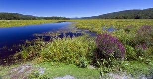 Bashakill panorama. Bashakill Wildlife Management Area on the summer day Royalty Free Stock Images