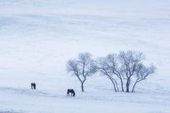 Bashang草原在冬天 免版税库存图片