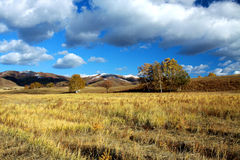 Bashang grässlätt Arkivbilder