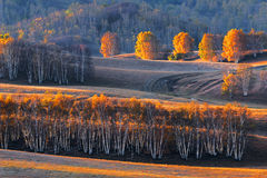 Bashang grassland in the autumn. Bashang grassland is located in the northwest, north China's hebei province, Inner Mongolia plateau, the south rim (commonly Royalty Free Stock Images