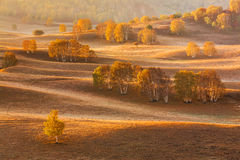 Bashang grassland in the autumn Stock Images