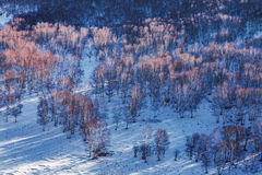 Free Bashang Grassland In Winter Stock Photo - 48011140