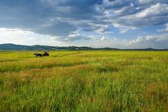 Bashang landscape. Bashang Grassland is in the Inner Mongolia of China. it is a beauty spot royalty free stock photography