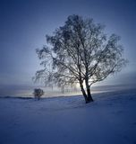 Bashang snow. A big snow tree, shoot in hebei bashang Stock Photo