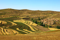 Bashang terraces Royalty Free Stock Photo