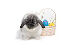Bashful Easter Bunny Royalty Free Stock Photography
