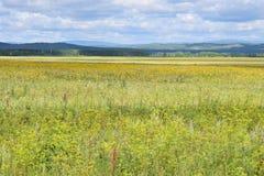 Bashkir дорога через предгорья Ural и поля лугов Стоковое Изображение RF