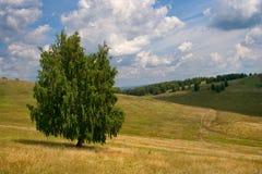 Bashkortostan Felder Lizenzfreies Stockbild