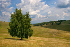 Bashkortostan fields Royalty Free Stock Image