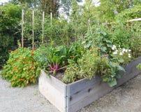 Basi alzate del giardino Fotografie Stock Libere da Diritti