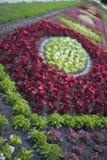 Basi di fiore Fotografie Stock
