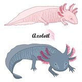 Vector set of outline Mexican axolotl or walking fish in black and albino isolated on white background. Vertebrate animal amphibian in contour style for stock illustration