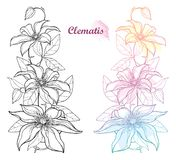 Vector set of vertical bouquet with outline Clematis or Traveller`s joy ornate flower bunch, bud and leaves isolated. Vector set of vertical bouquet with vector illustration