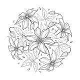 Vector round bouquet with outline Clematis or Traveller`s joy ornate flower bunch, bud and leaves in black isolated on white. Vector round bouquet with outline vector illustration