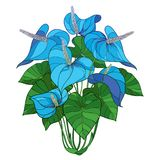 Vector outline tropical plant Anthurium or Anturium pastel blue flower bunch and green leaves isolated on white background. stock images