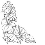 Vector corner bouquet of outline tropical plant Anthurium or Anturium flowers bunch and leaves in black isolated on white. stock photo