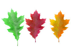 Basic color leaves Royalty Free Stock Photos