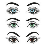 Basic colors female eyes and brows Royalty Free Stock Images