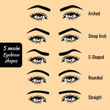 Basic eyebrow shape types vector illustration Stock Photography