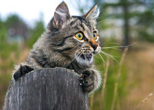 Basic instinct. Cat eye hunt hunting game rubbish Stock Photos