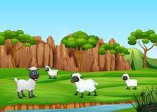 A group of sheep playing in the field. Illustration of A group of sheep playing in the field vector illustration