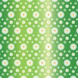 Floral Seamless Pattern of White Daisies in Gradated Green Background vector illustration