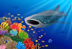 Whale shark cartoon with underwater view and coral background. royalty free stock images