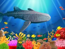 Whale shark cartoon with underwater view and coral background stock photography