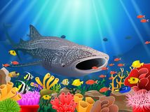 Whale shark cartoon with underwater view stock photos