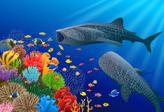 Whale shark cartoon with underwater view and coral background royalty free stock images